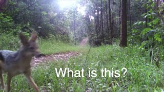 What is in the forest?