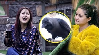 Bigg Boss 13 Review: Shehnaz Gill FUNNY Moment With Crow, Rashami Enjoys