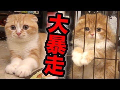 まるお&もふこ、電動おもちゃで大暴走w【キャッチミーイフユーキャン2】