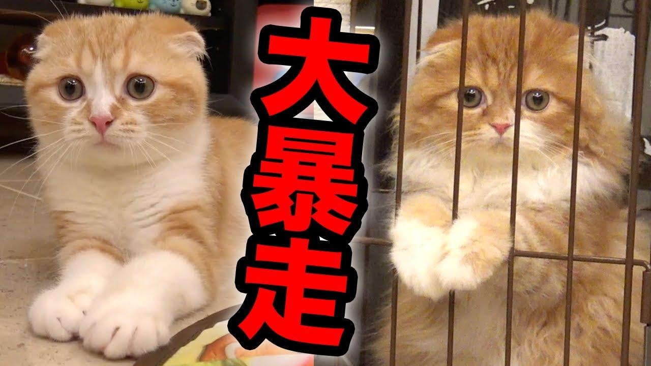 まるお もふこ 猫
