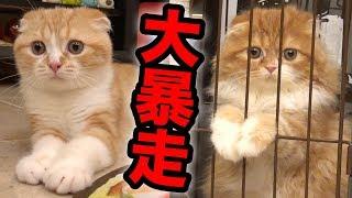 まるお&もふこ、電動おもちゃで大暴走w【キャッチミーイフユーキャン2】 thumbnail