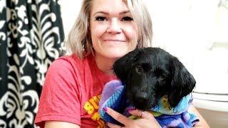 Doodle Puppy's First Bath - Dog Vlog