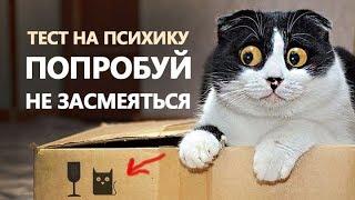 ПРИКОЛЫ С КОТАМИ подборка 2018 топ # JOKES WITH CATS # Funny cat кошки и котята! кот танцует
