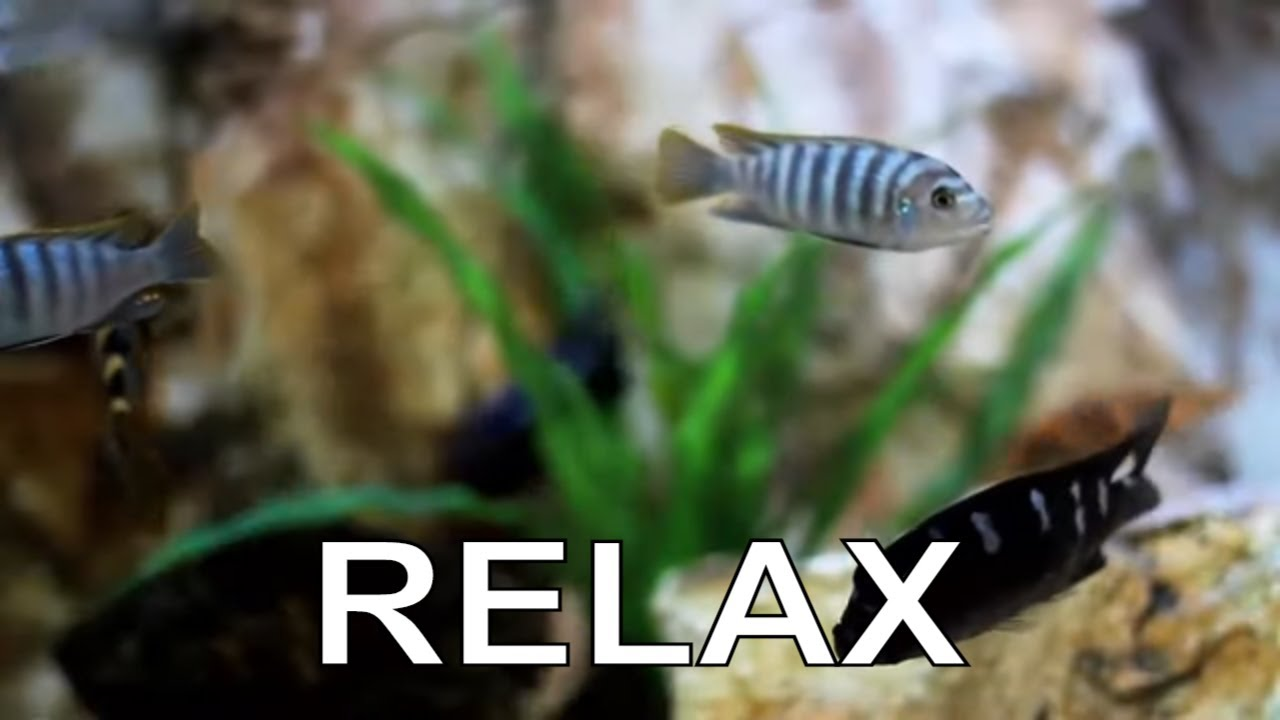 Релакс. Расслабляющая,  Успокаивающая и Гармонизирующая Музыка. Музыка для Вечерней Медитации MyTub.