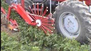Weremczuk  - ALINA ECO - kombajn do zbioru warzyw korzeniowych (carrot harvester)