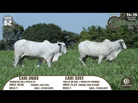 LOTE 62   CAXI 2603, CAXI 3351