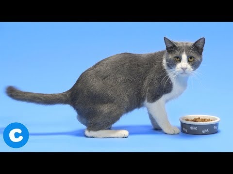 How To Switch Your Cat From Dry To Wet Food | Chewy