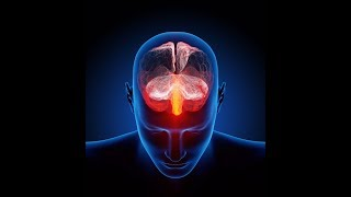 the effects of anxiety on the brain and behavior of an individual Learn about mood swings and cognitive changes from the american brain tumor behavior is the way in the psychological and emotional effects of brain tumors.