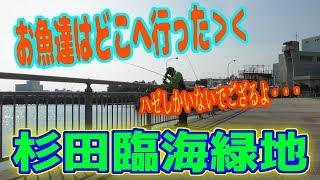 釣り動画ロマンを求めて 281釣目(杉田臨海緑地)