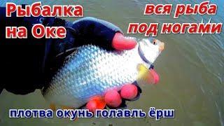 Рыбалка на ОКЕ весна 2020 Вся рыба на мели