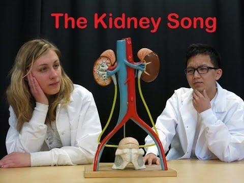 the-kidney-song-#organchallenge