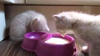 Невероятно смешное видео про котят