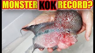 BIGGEST FLOWERHORN in U.S.A? Look at this MONSTER KOK!