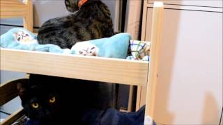 Ikea Doll Bed Turns Into Doublt-deck Bed For Kittens!ikeaの人形ベッドを二段猫ベッドにしました