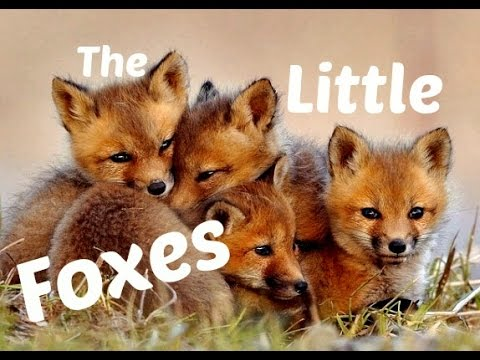 the little foxes 3-5-12 song of solomon says in chapter two verse 15, take us the foxes, the little foxes, that spoil the vines: for our vines have tender grapes as i.