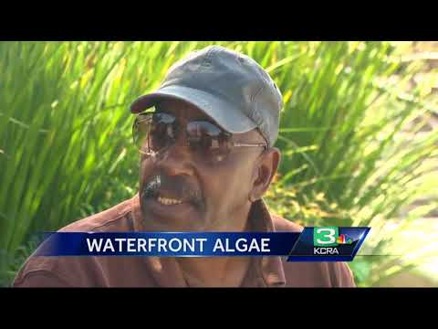 Algae bloom a stinky issue on Stockton's waterfront
