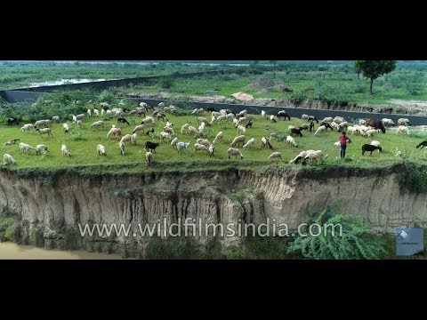 Soil erosion, over grazing and sand mining - aerial view of environmental ills in India