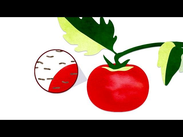 ผักผลไม้ที่เป็นจุด ๆ กินได้หรือเปล่า - Elizabeth Brauer