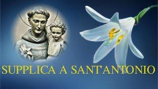 Supplica a Sant'Antonio - Da recitare il martedì e il 13 del mese