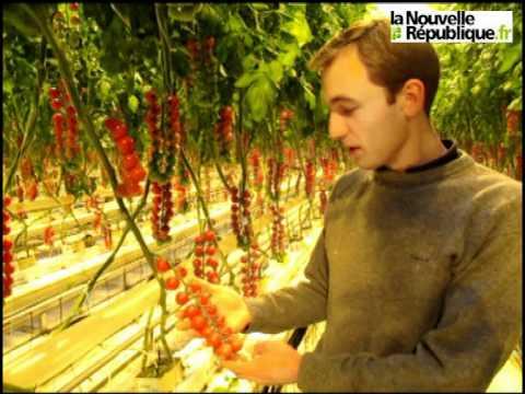 Chinonais la culture des tomates dans les serres du - Culture du cresson de jardin ...