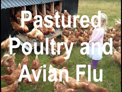 Bird Flu in Europe and the risk of having to farm conventionally