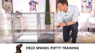Field Spaniel Potty Training from WorldFamous Dog Trainer Zak George   Train a Field Spaniel Puppy