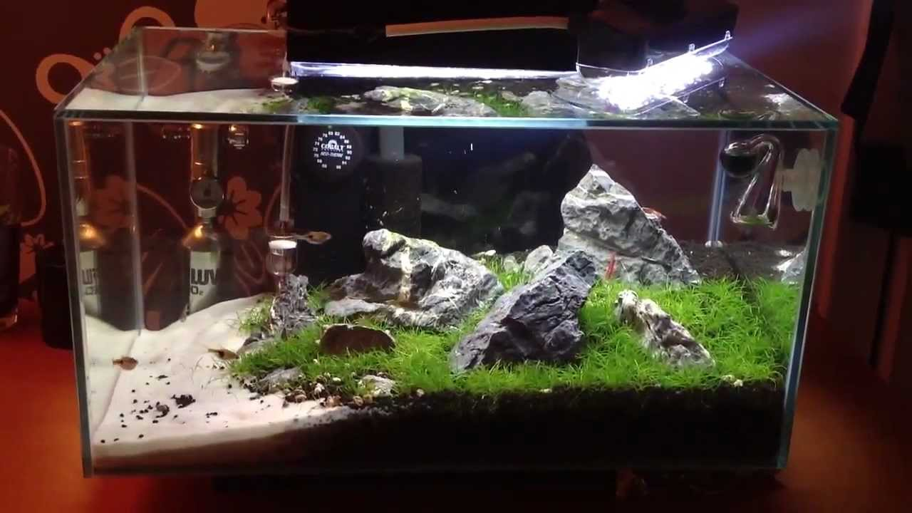 My 6 Gallon Fluval Edge 5 Weeks Youtube