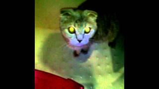 Кошка в душе.
