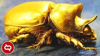 Baru Sadar! Serangga Yang Dulunya Disepelekan, Sekarang Jadi Incaran Dan Bernilai Jual Tinggi