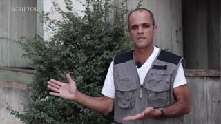 Pedra do Bisnau, Formosa, Goiás - Entrevista com prospector Noel dos Santos