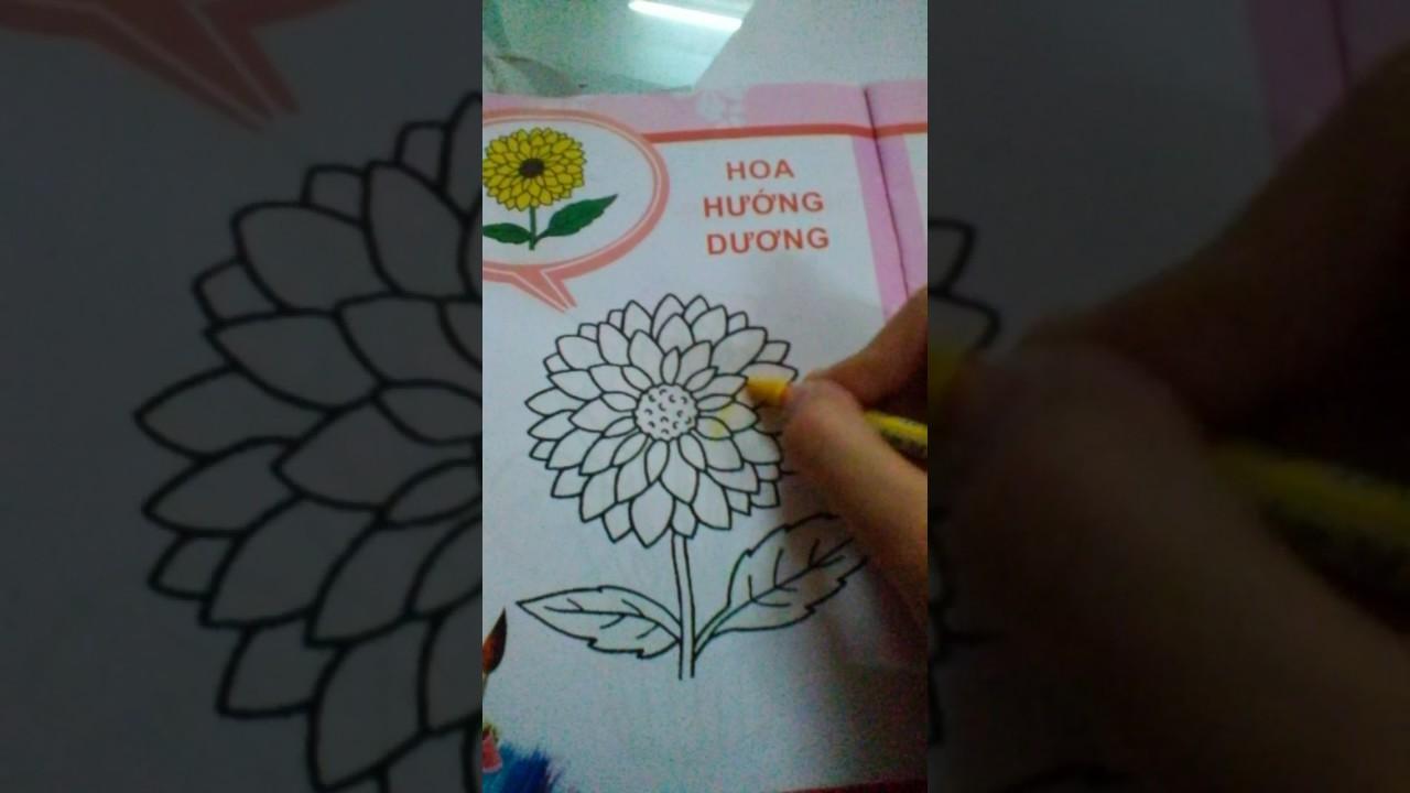 Zitu tập tô màu – Hoa hướng Dương