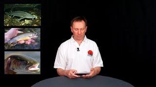 видео Рыбацкие базы в удмуртии