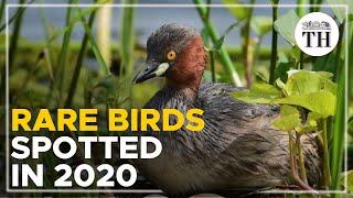2020: Indian bird watchers' paradise