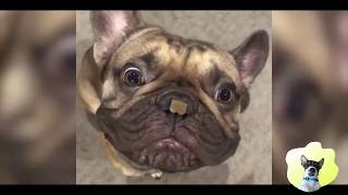 Funniest Animals - Try To Not Laugh!! Funny Animals Compilation