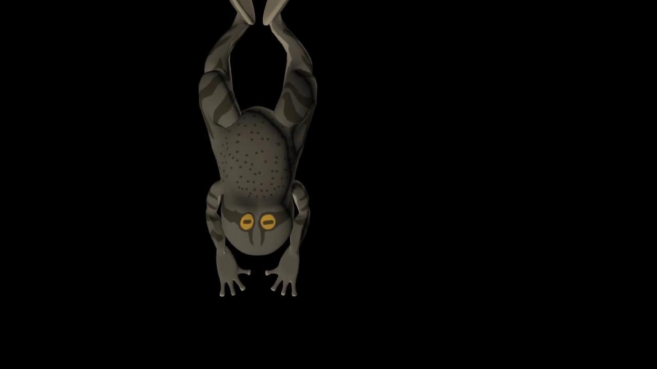 frog swim animation - YouTube