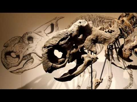 Royal Tyrrell Museum - Highlights
