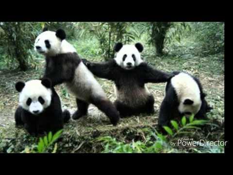 Panda (clean)