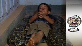 Repeat youtube video The Cambodian Boy Who Sleeps with a Python