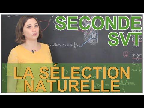 La sélection naturelle - SVT Seconde - Les Bons Profs