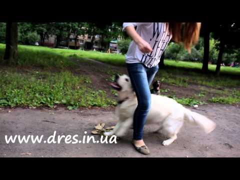 Щенок приучаем оставаться в одиночестве дрессировка щенка
