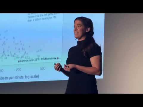 The citizen science revolution | Leesa Ricci | TEDxSUU