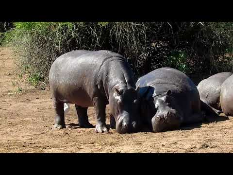 PickNaz Zambia Team | Site Seeing Trip in Zambia & Botswana