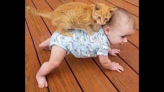 Воспитание человека Подборка смешного видео с котами для хорошего настроения