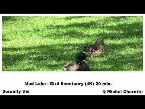 Mud Lake - Bird Sanctuary 4K (Sound Only) 20 Min.