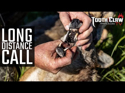 Long Distance Call – Coyote Hunting