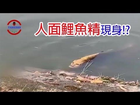 [TOP5]數個詭異的人面生物~發現傳說中的人面鯉魚精!?