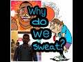 what's the causes of sweating?/ Thermo heat regulation/ Hyperhidrosis