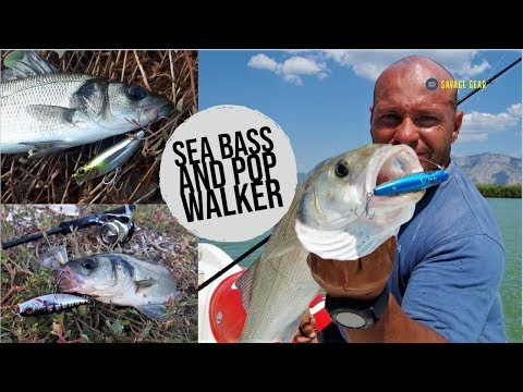 "7 Sea Bass with Pop Walker 66! Introducing the ""Pop Pop Walk"