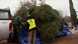 Cutting the State's Official Christmas Tree