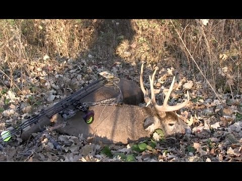 Trailer do filme The Killing of a Sacred Deer